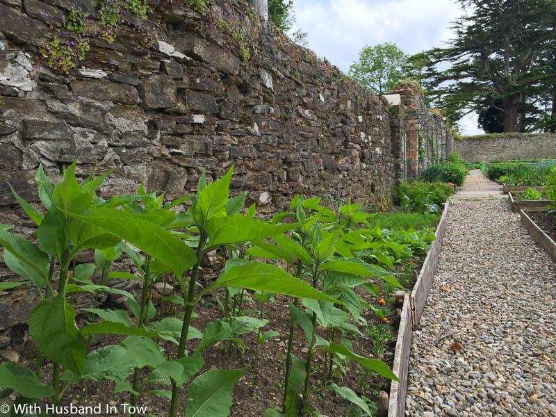 Exploring a traditional walled garden in northern ireland for Garden design ideas northern ireland