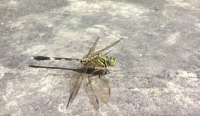 Bugs in Bali