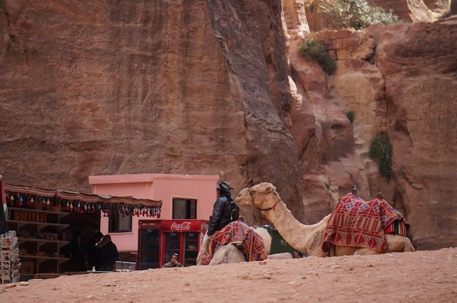 Cost of Petra Tours