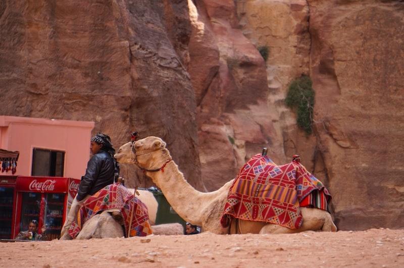 animals of Petra