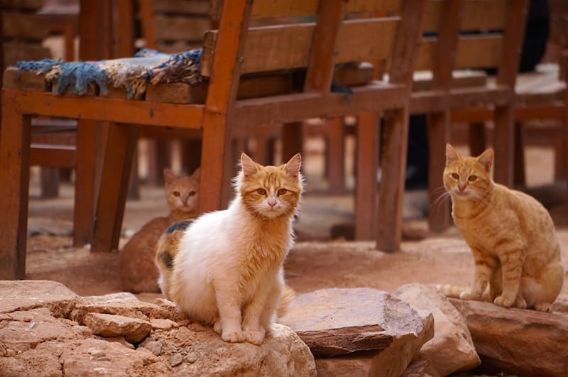 Animals in Petra