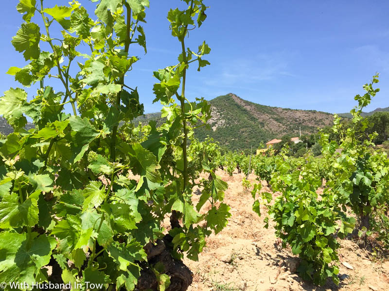 wine and travel in Catalonia