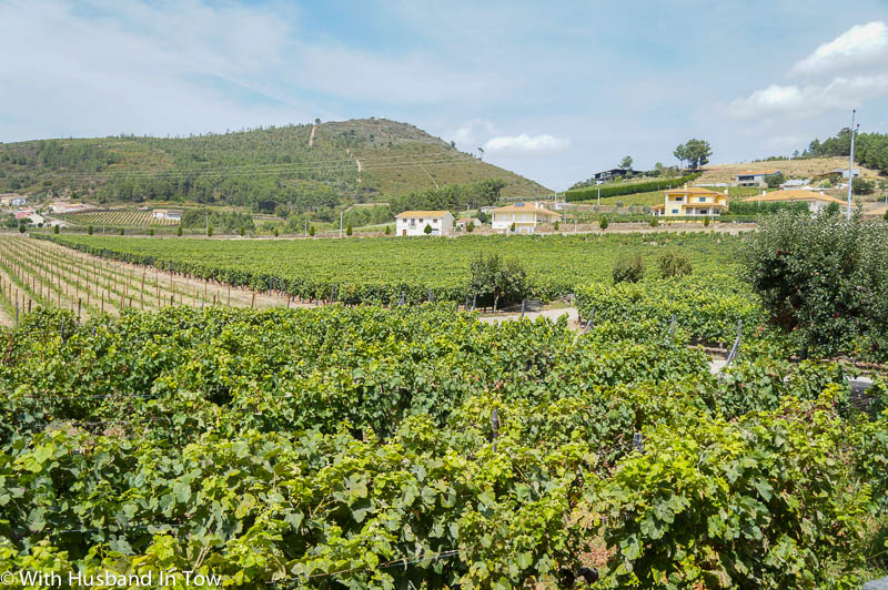 How to Be a Wine Tourist