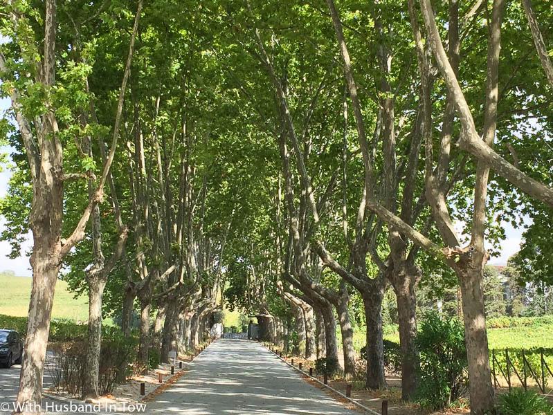 Douro Valley Wine Tourism - Pacheca