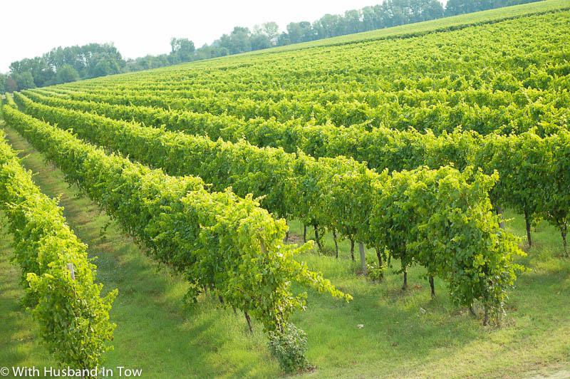 Italian white wine - Albana di Romagna DOCG