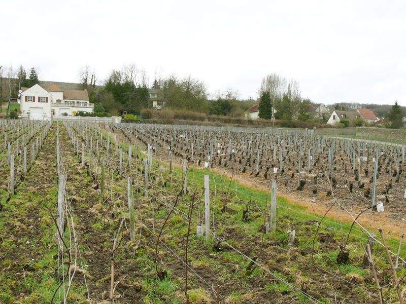 Best Champagne Wine Tours - Wine Tasting When Traveling