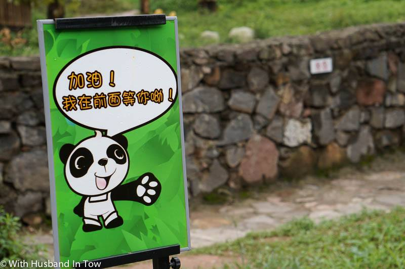 Cheapest Chengdu Panda Tour - Panda Zoo