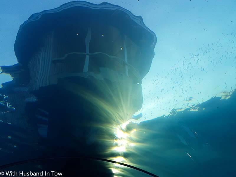 5.8 Underwater Restaurant