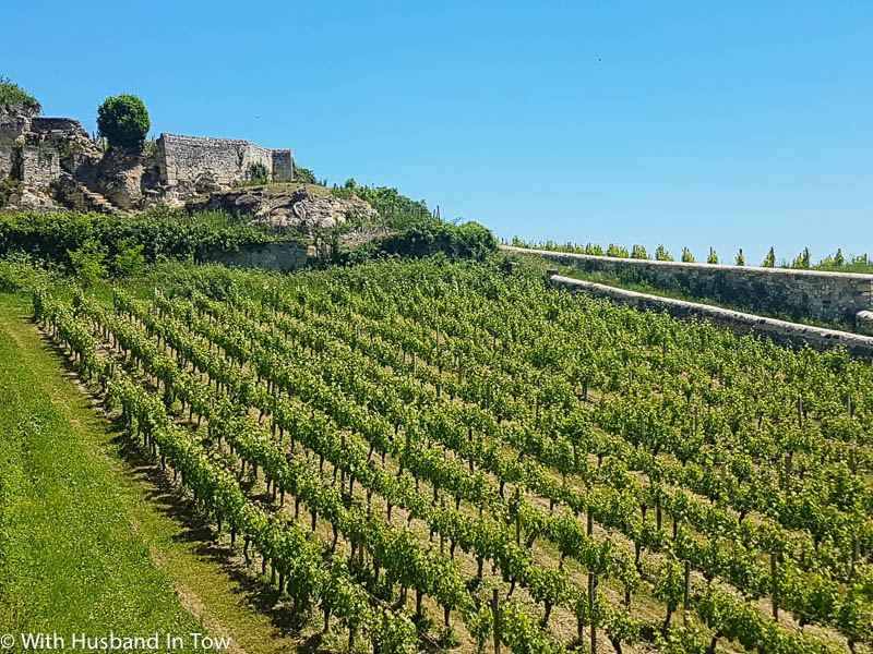 How To Find The Best Bordeaux Wine Tours – Wine Tasting In Bordeaux