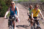 Mendoza Wine Tours and Wine Tasting
