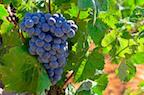 Valencia Wine Tour and Wine Tasting