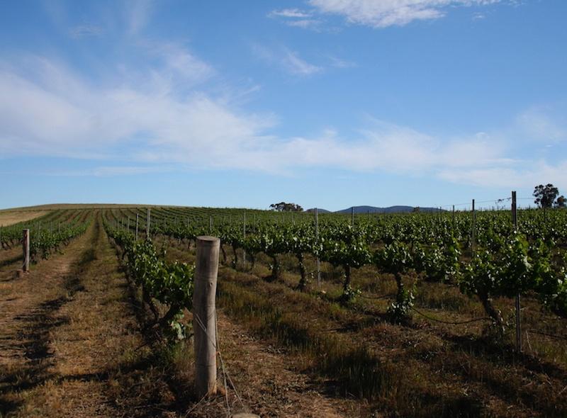 Mudgee Australia Wine Tours