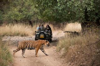 Traveling in India - Tiger safari