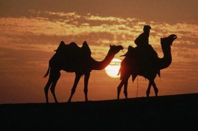 Traveling in India - Camel Safari