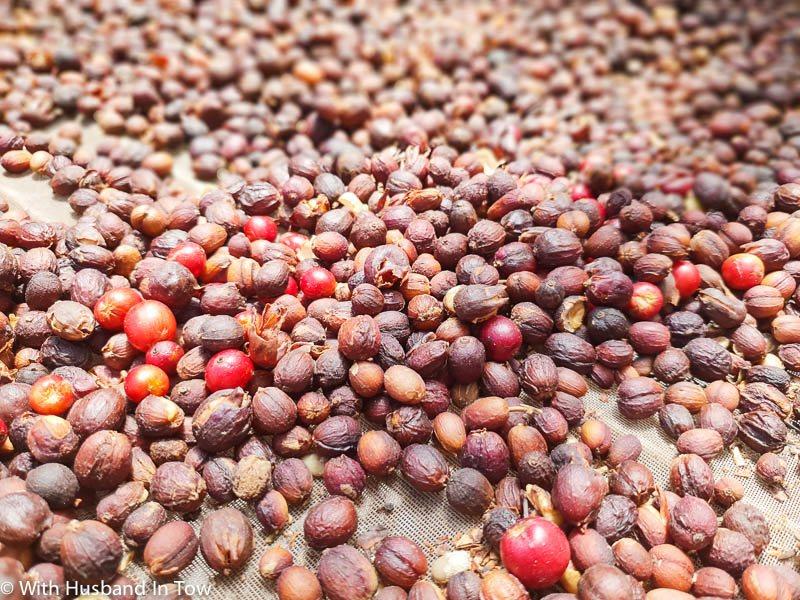Gran Canaria coffee plantation - ageate coffee
