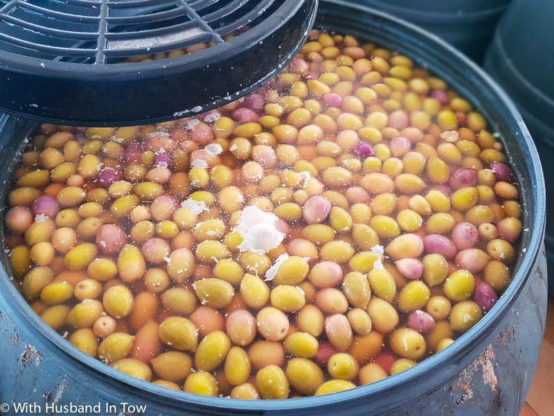 Gran Canaria Olives