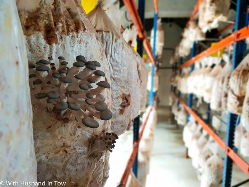 mushrooms in Gran Canaria