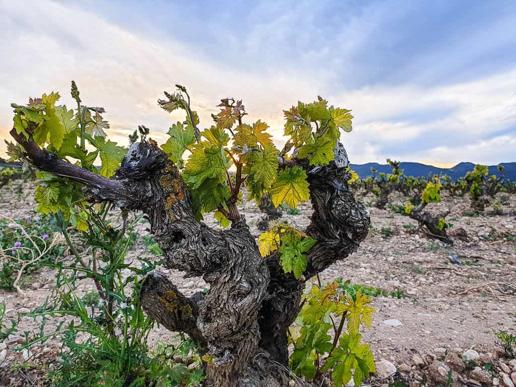 Rioja Wineries Guide - How To Tour The Best Bodegas in Rioja Spain To