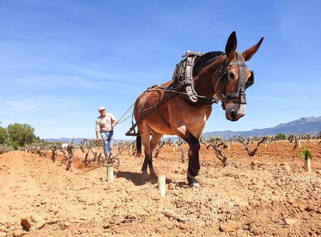 Finca Allende Rioja