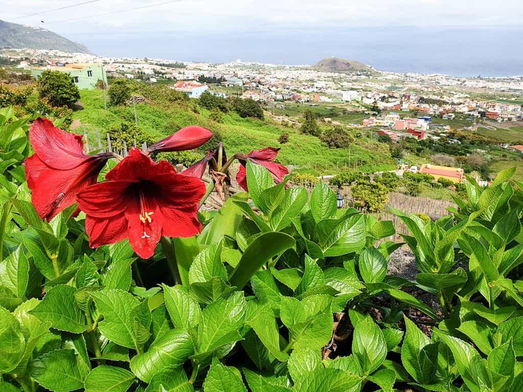 Tenerife Wine Guide - How To Go Wine Tasting In Tenerife
