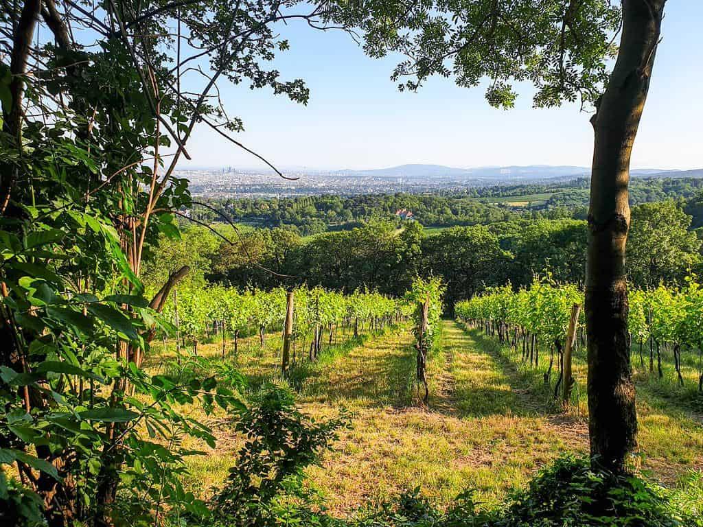 Austrian wine country